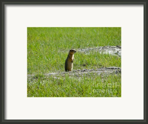 Canadian Prairie Icon Framed Print By Al Bourassa