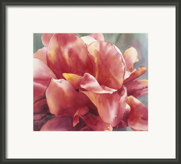Canna Framed Print By Ariel Freeman