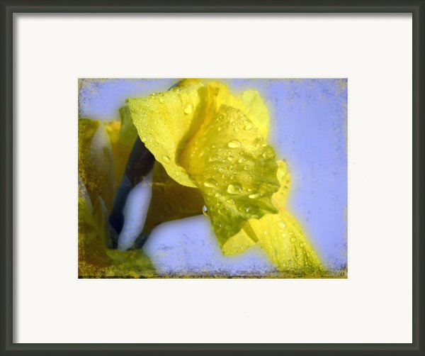 Canna In The Morning Framed Print By Todd A Blanchard