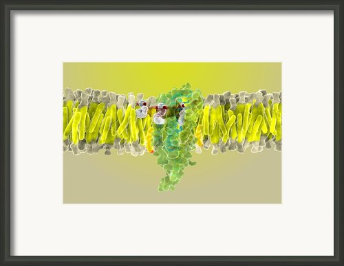 Cannabinoid Receptor Binding, Artwork Framed Print By Ramon Andrade 3dciencia