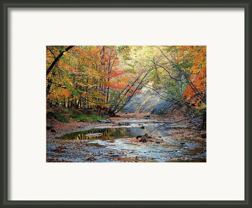Canopy Of Color Iv Framed Print By Robert Harmon