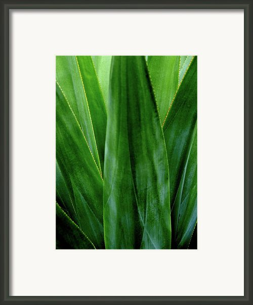 Canouan Resort The Grenadines 30 Framed Print By Per Lidvall