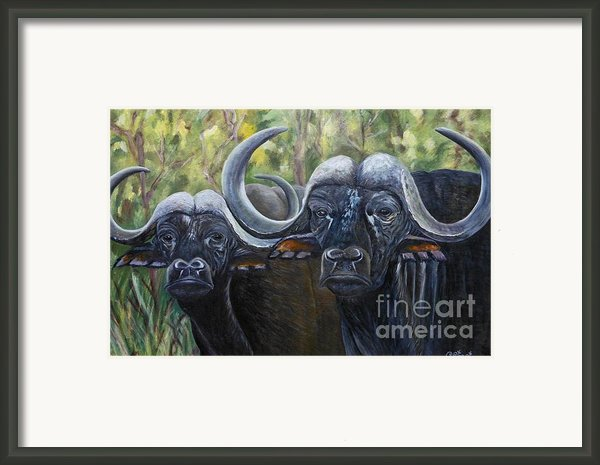 Cape Buffalo Second Painting Framed Print By Caroline Street