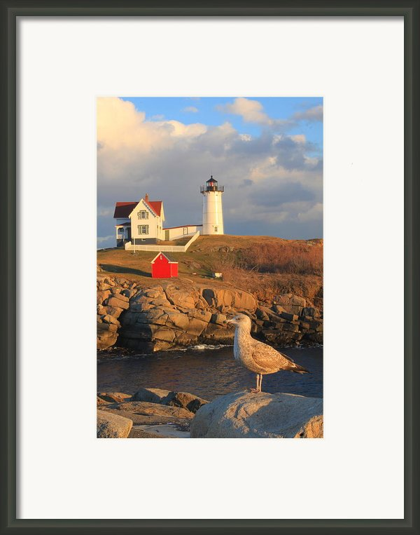 Cape Neddick Nubble Lighthouse And Seagull Framed Print By John Burk