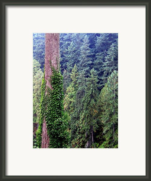 Capilano Canyon Ivy Framed Print By Will Borden