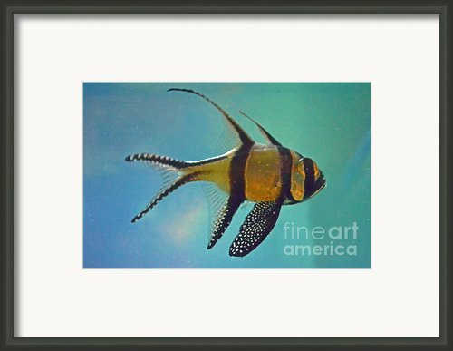 Cardinal Fish Framed Print By Sandi Oreilly