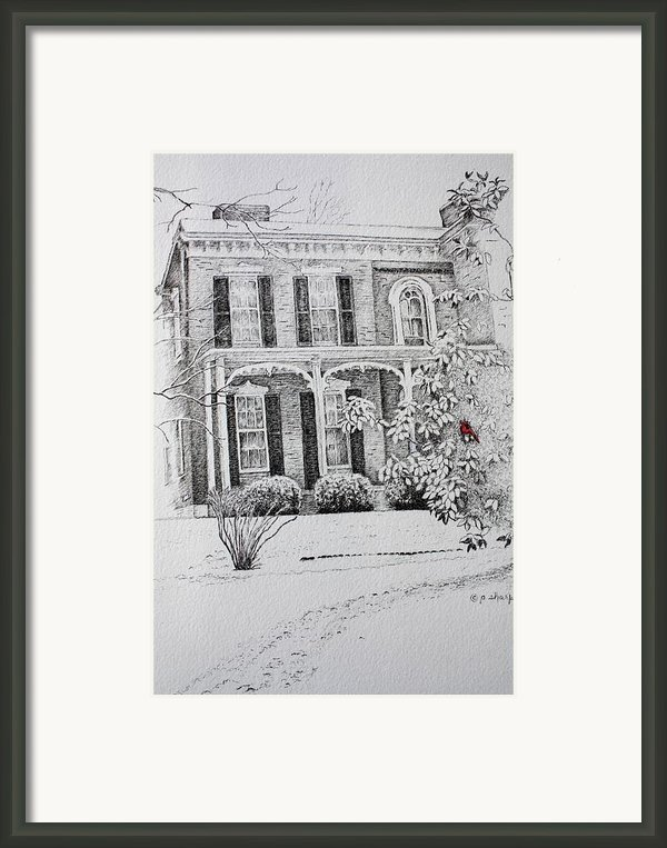 Cardinal Framed Print By Patsy Sharpe