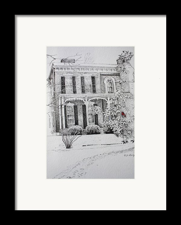 Cardinal Framed Print By Patsy Sharpe