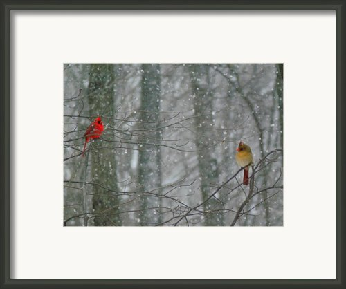 Cardinals In Snow Framed Print By Serina Wells