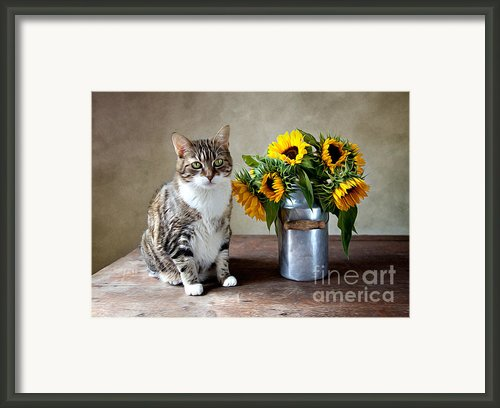 Cat And Sunflowers Framed Print By Nailia Schwarz