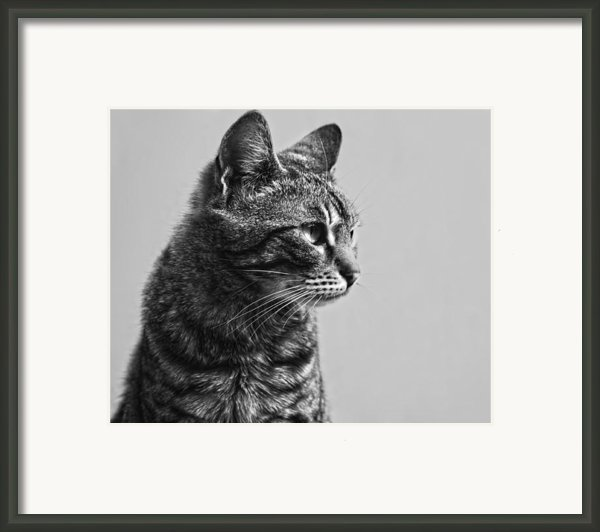 Cat Framed Print By Chelaru Catalin Ionut