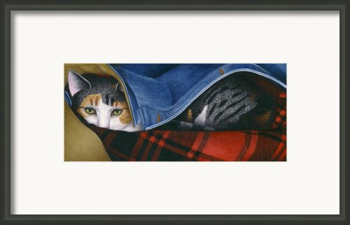 Cat In Denim Jacket Framed Print By Carol Wilson
