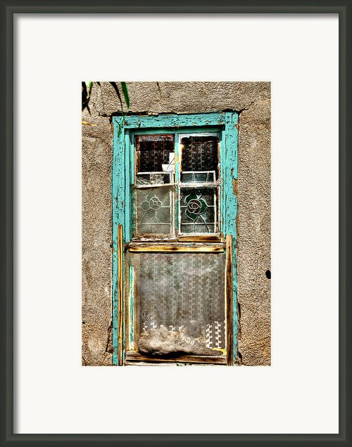 Cat In The Window Framed Print By David Patterson