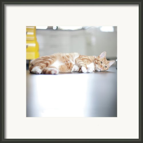 Cat Lying On Floor Framed Print By Paula Daniëlse