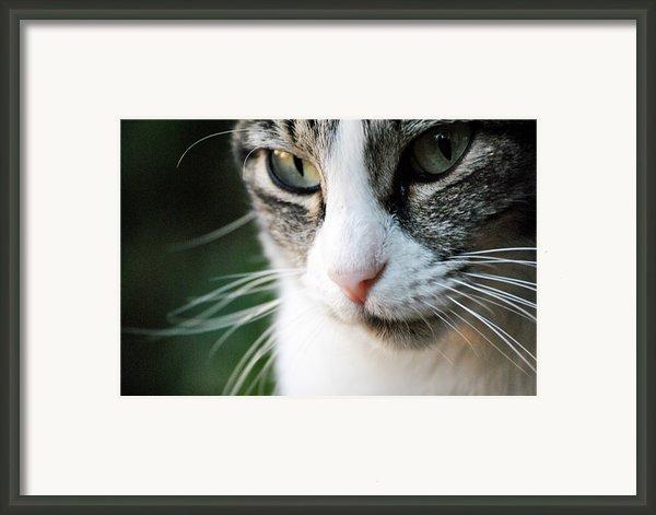 Cat Portrait Framed Print By Julia Williams