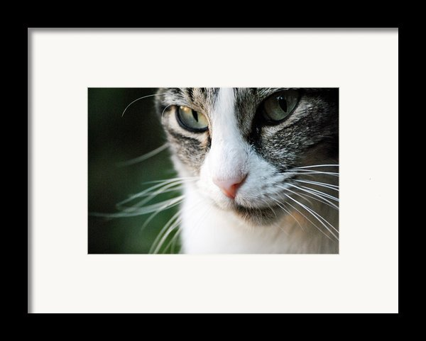 Cat Portrait Framed Print By Julia Williams