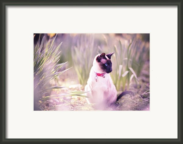 Cat Sitting By Daffodils Framed Print By Sasha Bell