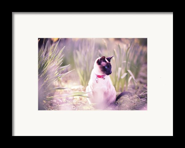Cat Sitting By Daffodils Framed Print By Sasha Bell