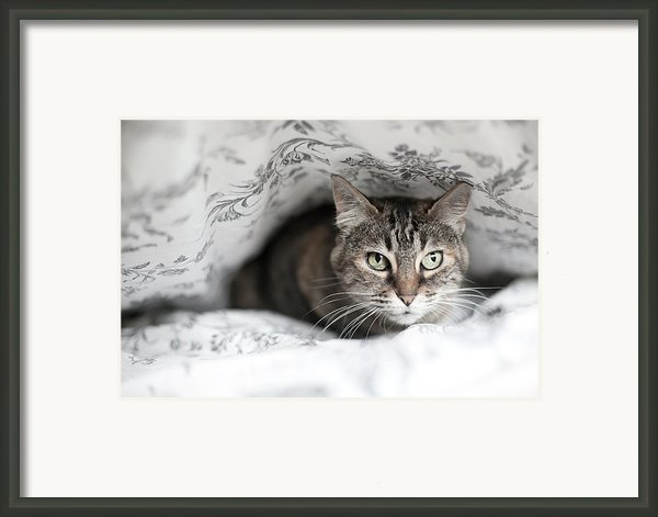 Cat Under In Blankets Framed Print By Image Taken By Mayte Torres