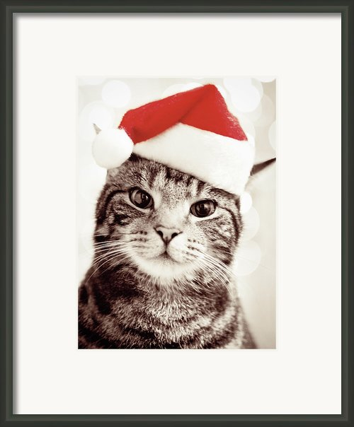 Cat Wearing Christmas Hat Framed Print By Michelle Mcmahon