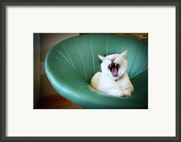 Cat Yawning In A Vintage Blue Green Chair Framed Print By Carrie Anne Castillo