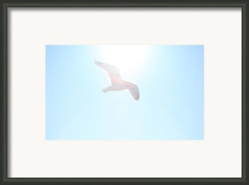 Catch The Rays Framed Print By Karol  Livote