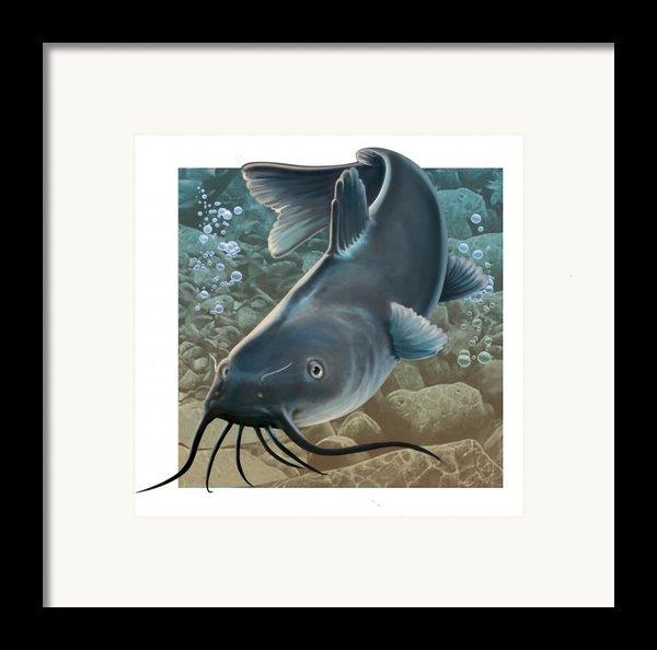 Catfish Framed Print By Valerian Ruppert
