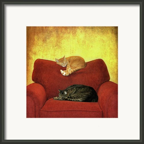 Cats Sleeping On Sofa Framed Print By Nancy J. Koch, Pittsburgh, Pa