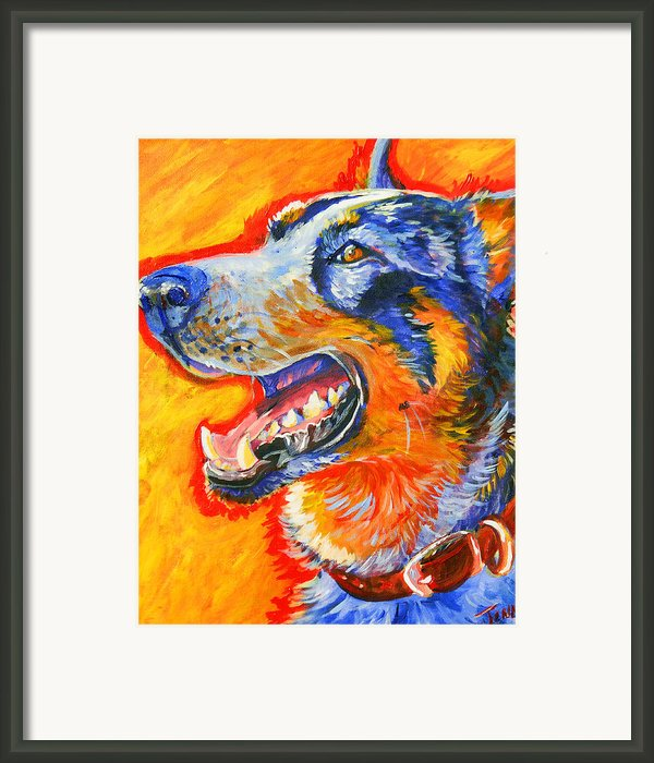 Cattle Dog Framed Print By Jenn Cunningham