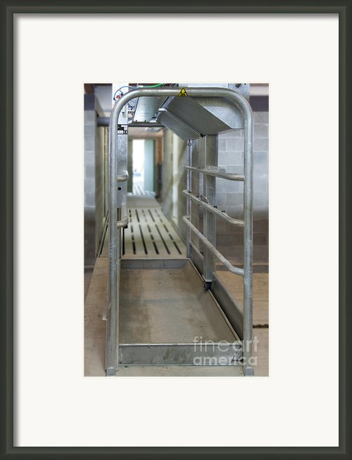 Cattle Foot Bath Walkway Framed Print By Jaak Nilson