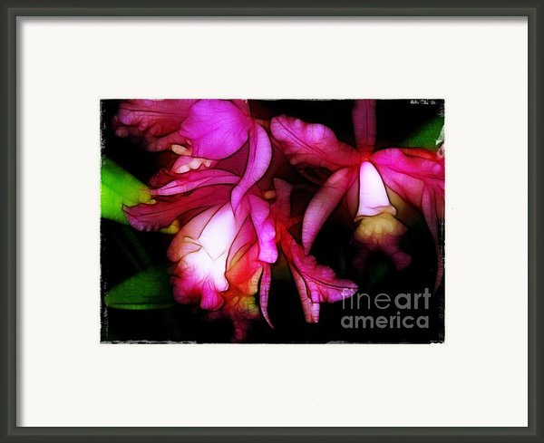 Cattleyas Framed Print By Judi Bagwell