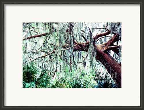 Cedar Draped In Spanish Moss Framed Print By Thomas R Fletcher