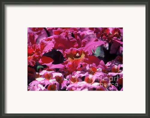 Celebration Too Framed Print By Alcina Morello