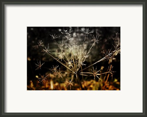 Changes Framed Print By Ellen Lacey
