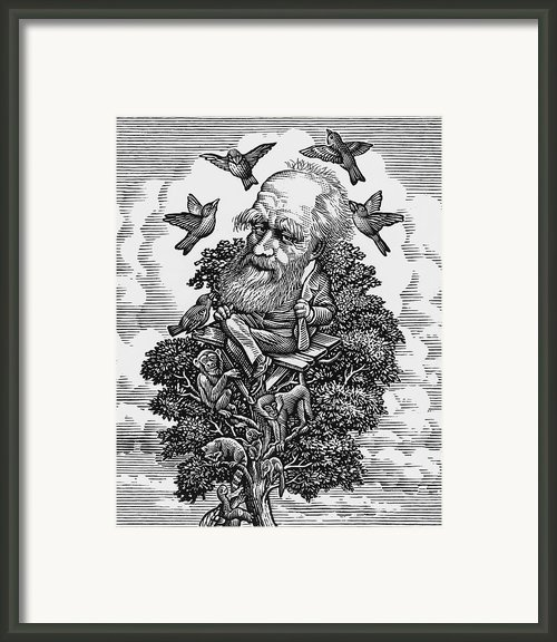 Charles Darwin In His Evolutionary Tree Framed Print By Bill Sanderson