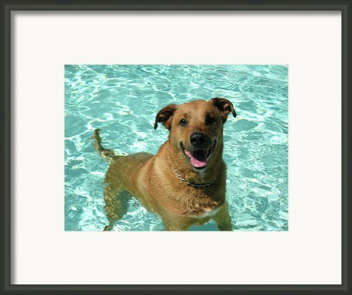 Charlie In Pool Framed Print By Rebecca Wood