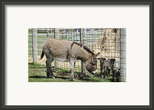 Checking Out The New Kids On The Block Framed Print By Leeann Mclanegoetz Mclanegoetzstudiollccom