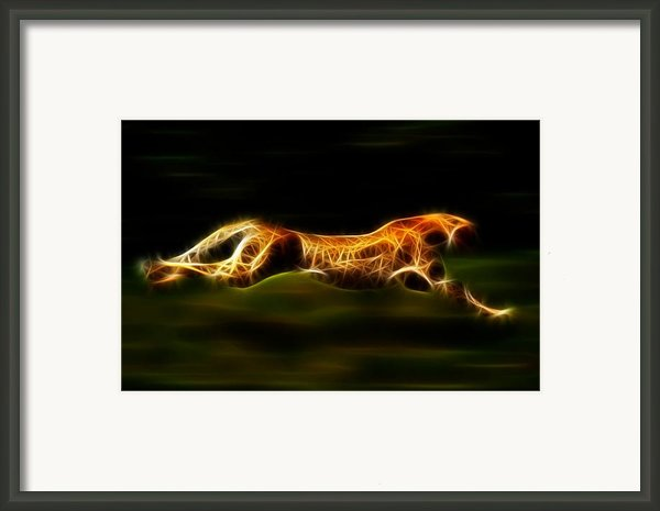 Cheetah Hunting His Prey Framed Print By Pamela Johnson