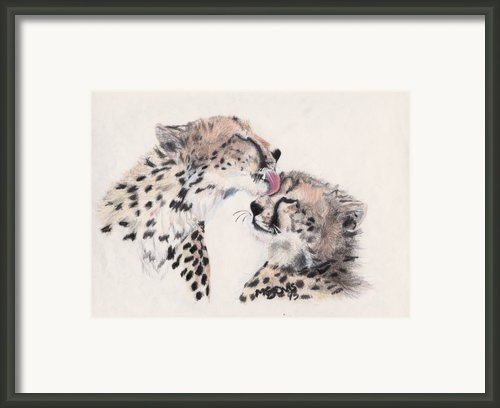 Cheetah Love Framed Print By Marqueta Graham