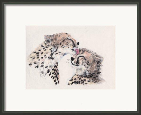 Cheetah Love Framed Print By Marqueta Graham