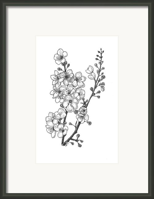 Cherry Blossems Framed Print By Christy Beckwith
