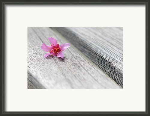 Cherry Blossom On Bench Framed Print By Lisa  Phillips