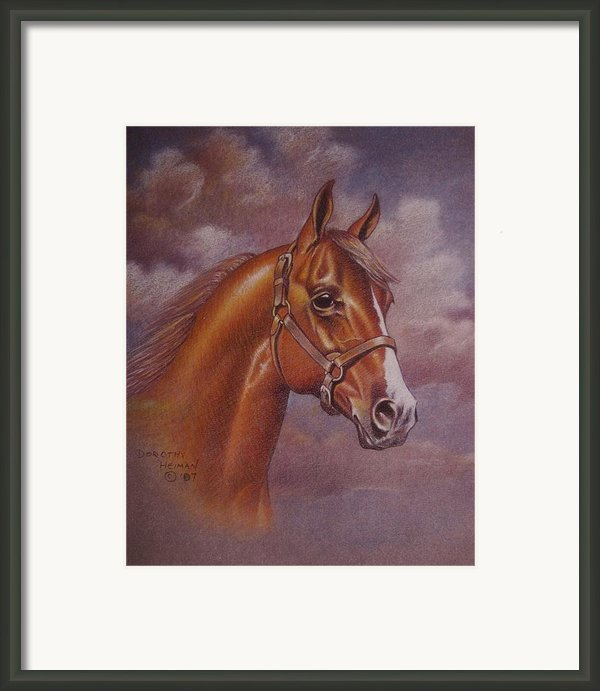Chestnut Quarter Horse Framed Print By Dorothy Coatsworth