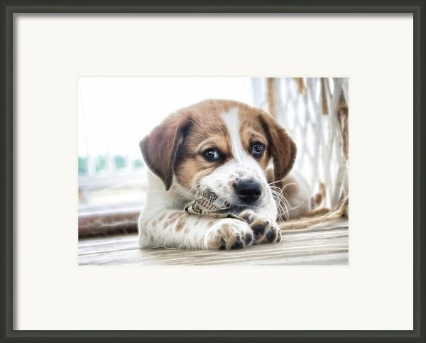 Chewing The News Framed Print By Tilly Williams