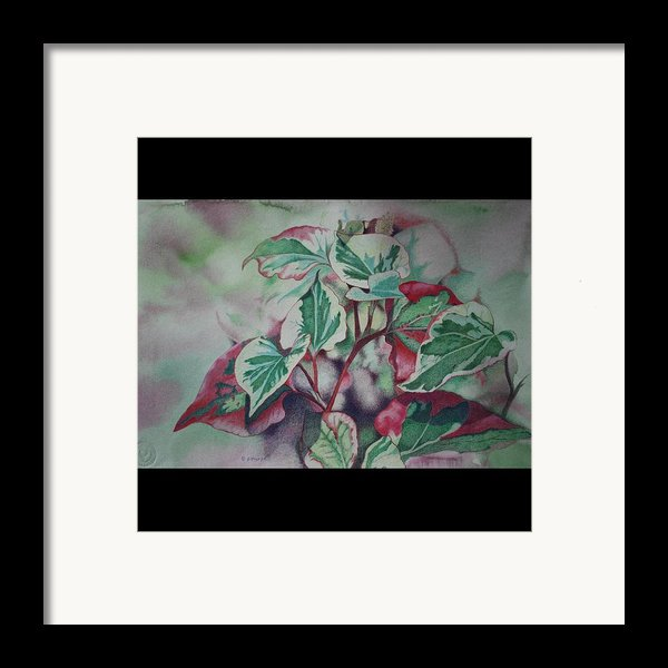 Christmas In July Framed Print By Patsy Sharpe