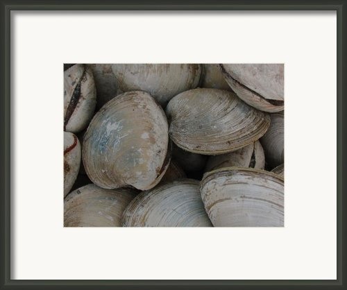 Clam Shells Framed Print By Juergen Roth