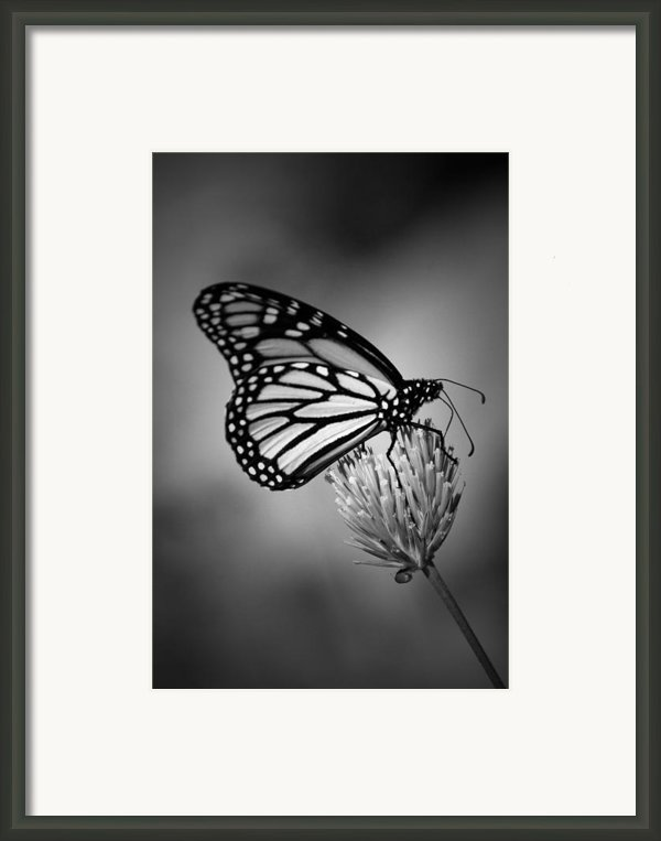 Classic Beauty Framed Print By Skip Willits