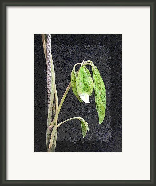 Climbing Framed Print By Tim Allen