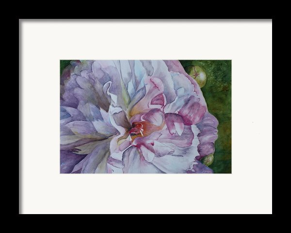 Close Focus Peony Framed Print By Patsy Sharpe