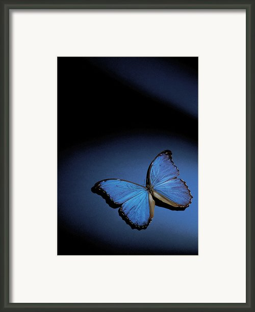 Close-up Of A Blue Butterfly Framed Print By Stockbyte